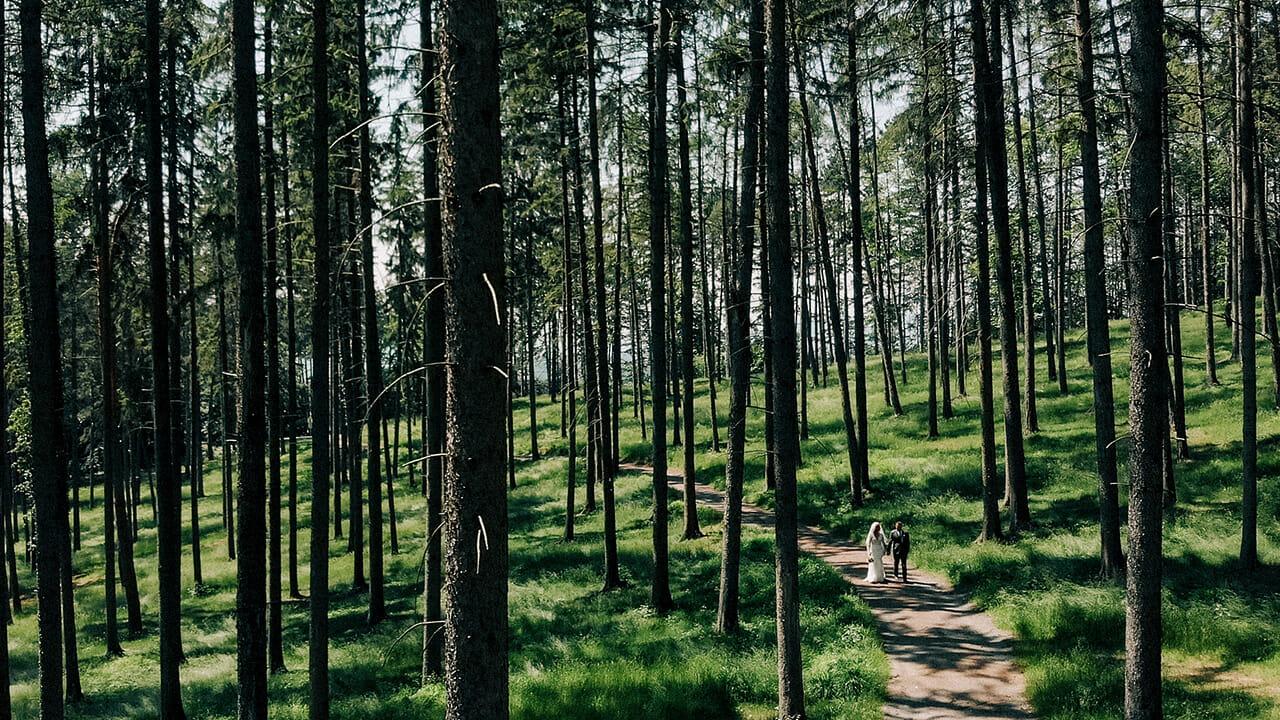 svadobná fotografia z lesa